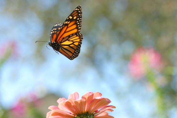 7718eba85 From Caterpillar to Butterfly | Libby Anne