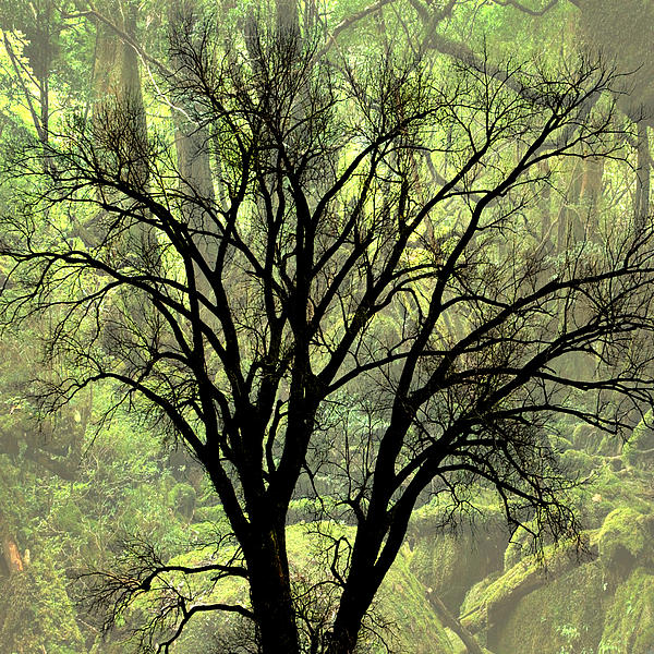 Freaky Tree 2 Photograph  - Freaky Tree 2 Fine Art Print