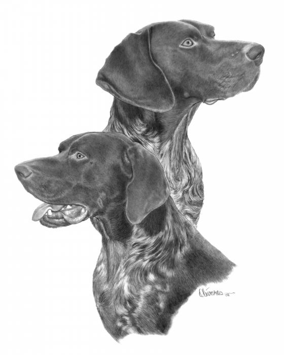 German Short Hair Drawing by Joe Olivares. Tags: dogs drawings