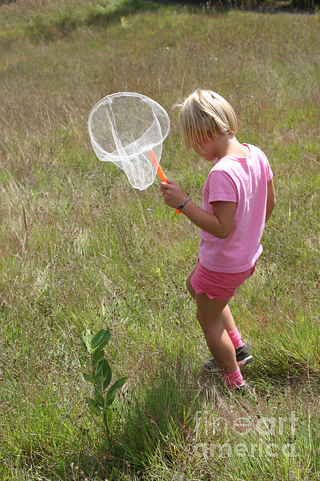 Science Photograph - Girl Collecting Insects In A Meadow by Ted Kinsman
