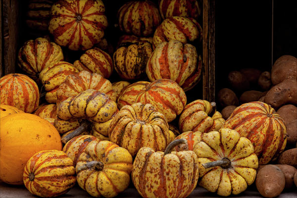 Gourds And Pumpkins. gourds photographs, pumpkins