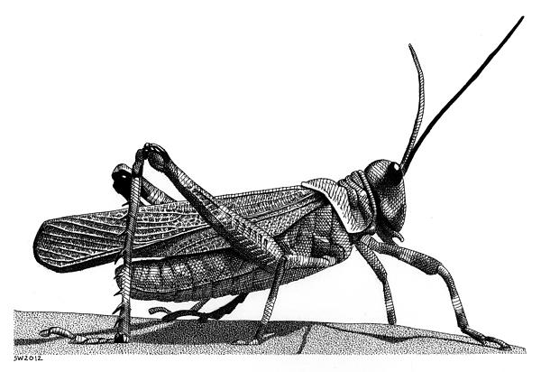 Scott Woyak - Grasshopper