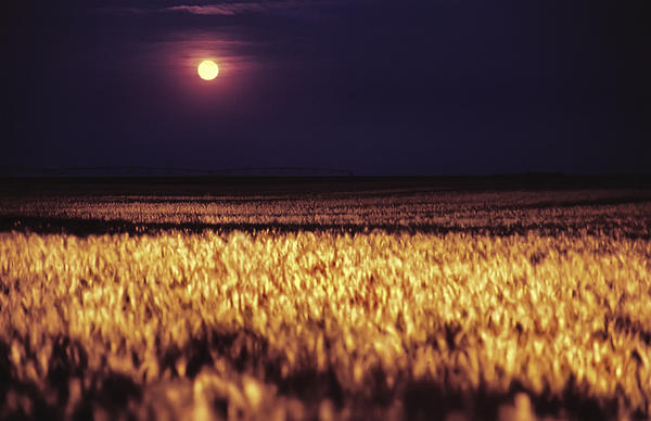 Jason Politte - Harvest Moon over Kansas