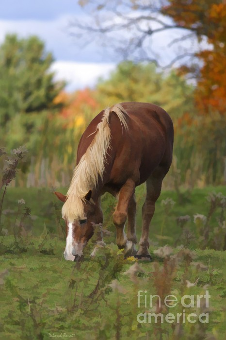 Deborah Benoit - Horse In Fall Pasture
