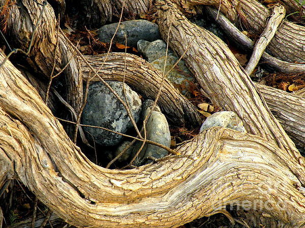 Keepsake Photograph  - Keepsake Fine Art Print