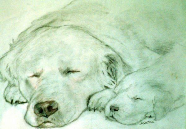 Let Sleeping Dogs Lye Drawing by Andrew Davies