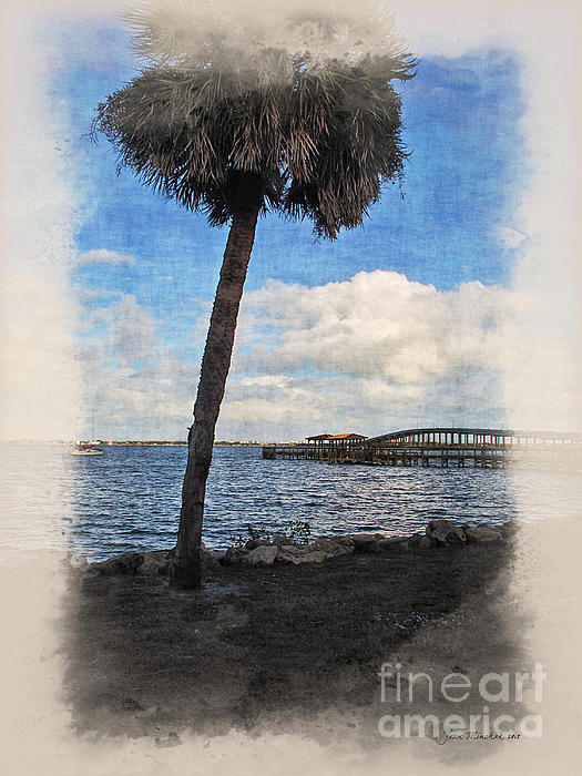 Joan  Minchak - Lone Palm Tree