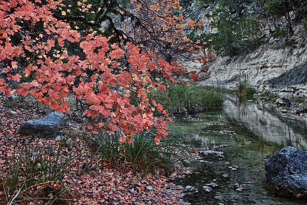 Lost Maples Fall Afternoon Photograph  - Lost Maples Fall Afternoon Fine Art Print