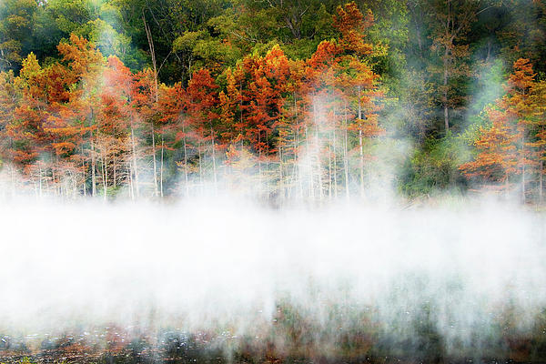Misty Autumn Morning Photograph  - Misty Autumn Morning Fine Art Print