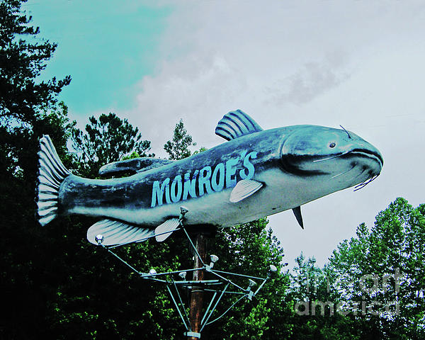 Monroes Catfish  Photograph  - Monroes Catfish  Fine Art Print