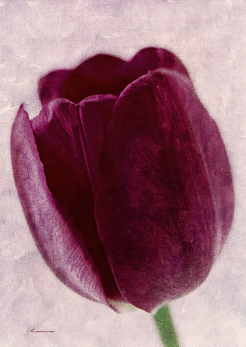 Painted Tulip Mixed Media  - Painted Tulip Fine Art Print