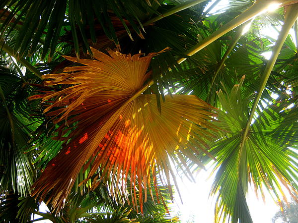 Palm Leaf Photograph