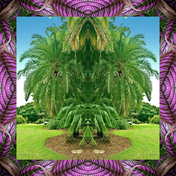 Palm Tree Ally Photograph  - Palm Tree Ally Fine Art Print