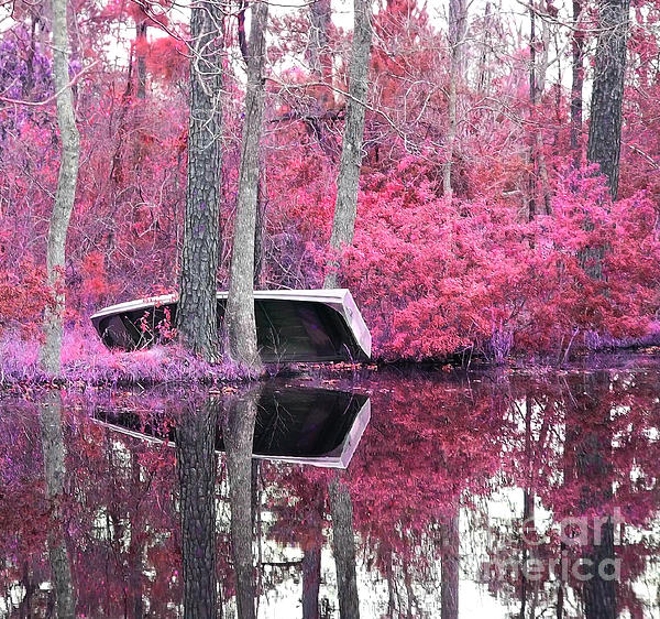 Bill Holton - Pink Reflection