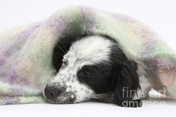 Nature Photograph - Puppy Sleeping Under Scarf by Mark Taylor