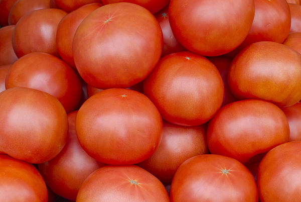 Red Ripe Tomatoes Photograph  - Red Ripe Tomatoes Fine Art Print