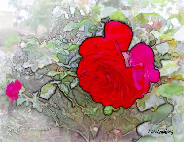 Red Roses in bloom Photograph - Red Roses in bloom Fine Art Print