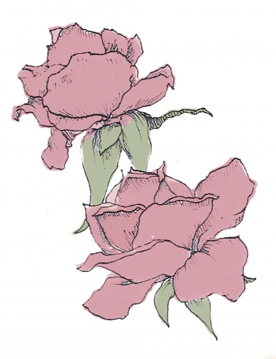 Roses Drawing - Roses Fine Art Print. Roses Drawing by Cara Maler