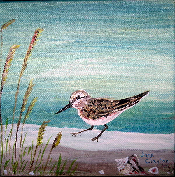 Jane Williams Clayton - Sandpiper and conch