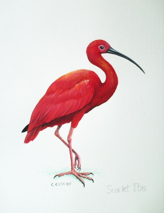 The Scarlet Ibis New on emaze