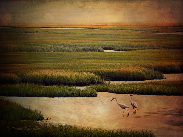 Lianne Schneider - Sea of Grass