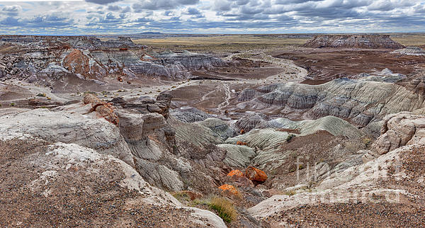 Sandra Bronstein - Stormy Morning At Petrified Forest