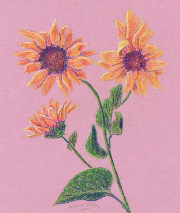 Sun Flowers Drawing - Sun Flowers Fine Art Print