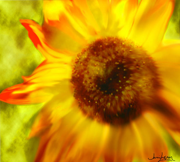 Janie Johnson - Sunflower-a-Blaze