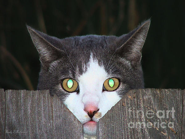 The Cats Meow Photograph  - The Cats Meow Fine Art Print