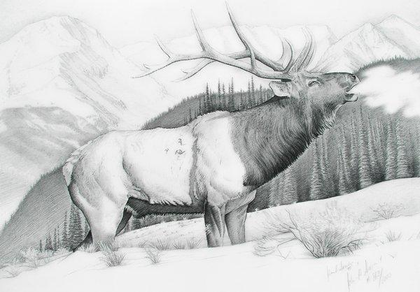 The Chlydesdale Drawing by John Senior