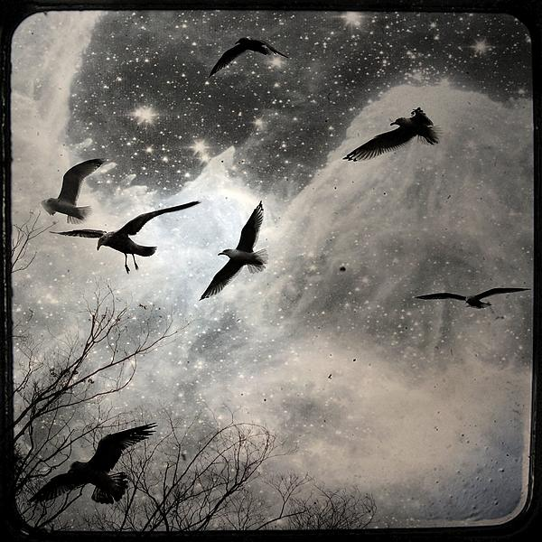 Gothicolors With Crows - The Stars