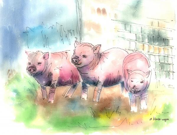 Pictures Of Pigs To Print. Pigs Fine Art Print