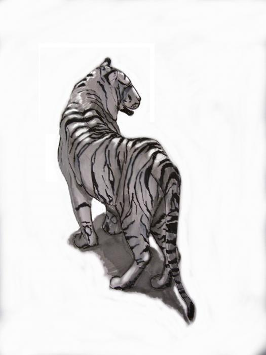 Tiger Pose Drawing by Alfredo Lozano - Tiger Pose Fine Art Prints ...