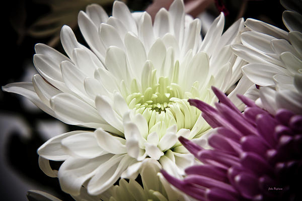 Two Flowers Photograph  - Two Flowers Fine Art Print