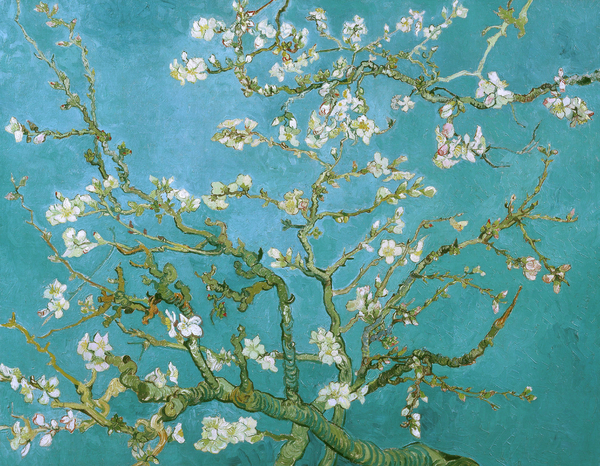 Vincent Van Gogh - Van Gogh Blossoming Almond Tree