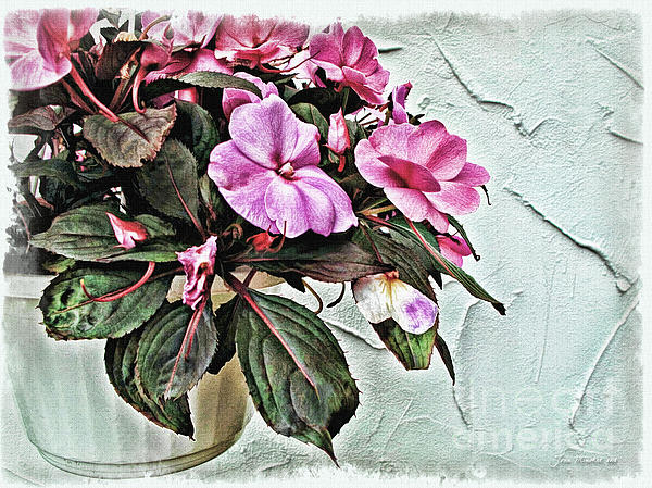 White Pot Photograph  - White Pot Fine Art Print