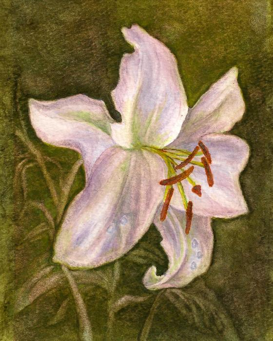White Tiger Lily Painting - White Tiger Lily Fine Art Print