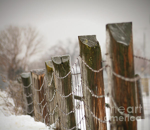 Winter Fence Photograph  - Winter Fence Fine Art Print