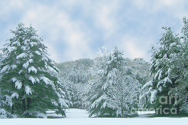 Winter Wonderland In The South Photograph