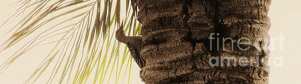 Marie Bulger - Woodpecker in Palm tree