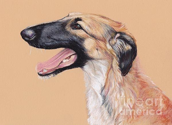 Charlotte Yealey - Young Female Borzoi