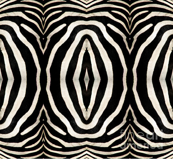 Zebra Hide Photograph  - Zebra Hide Fine Art Print