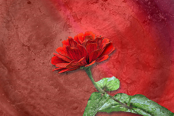 Larry Bishop - Zinnia Painting on Red