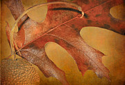 Acorn Prints -  First Sign of Autumn Print by David and Carol Kelly