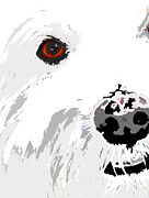Westie Digital Art -  I See You The White Dog by Phil Tailleur