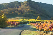 The Hills Of Clos La Chance Winery Fine Art Print by Artist and Photographer Laura Wrede