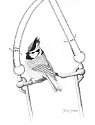 Titmouse Drawings - Bit and Bridled by Julie Stubbs