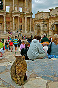 Library Digital Art - Cat near Library of Celsus in Ephesus-Turkey by Ruth Hager
