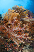 Whips Prints - Colorful Soft Corals Adorn The Stunning Print by Steve Jones