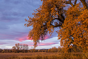 Tim Grams - Cottonwoods at Sunrise